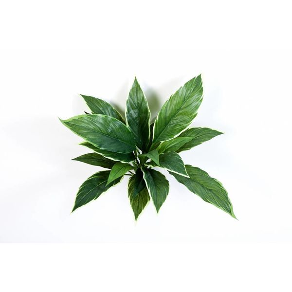 Cordyline - kunstplant