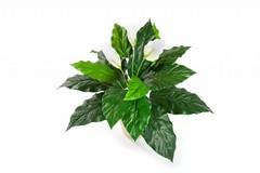 Bloeiende kunstplanten