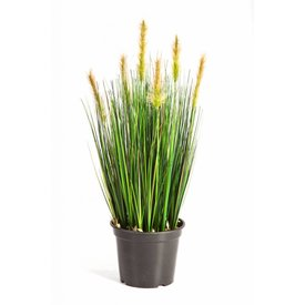 Fleur.nl - Grass Foxtail Bush Yellow - kunstplant