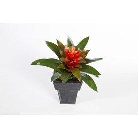 Fleur.nl - Bromelia - kunstplant