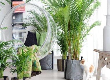 Wat planten met medewerkers doen