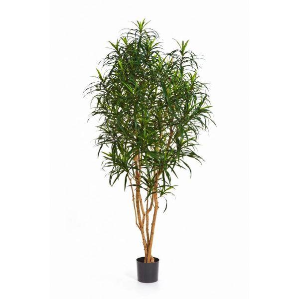 Dracaena Anita Tree Large - kunstplant