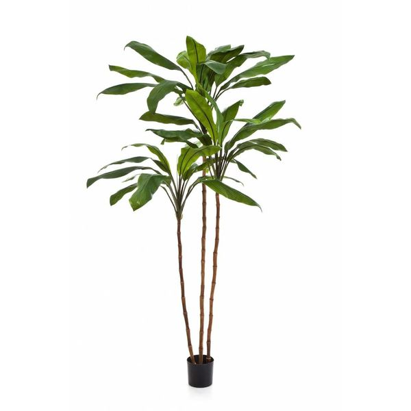 Cordyline Fruticosa Tree - kunstplant