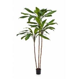 Fleur.nl - Cordyline Fruticosa Tree - kunstplant