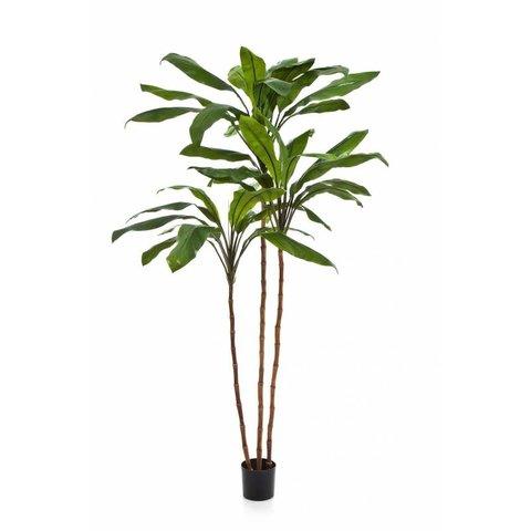 Cordyline Fruticosa Tree - kunstplant