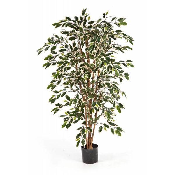 Ficus Nitida var. - kunstplant