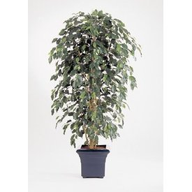 Fleur.nl - Ficus Nitida Exotica - kunstplant