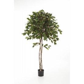 Fleur.nl - Ficus Exotica Umbrella - kunstplant