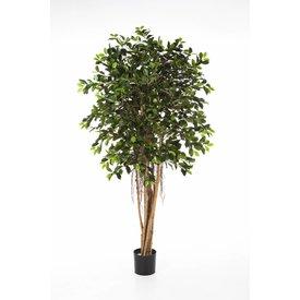 Fleur.nl - Ficus Retusa - kunstplant