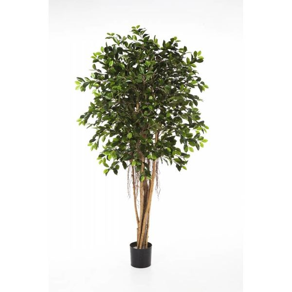 Ficus Retusa - kunstplant
