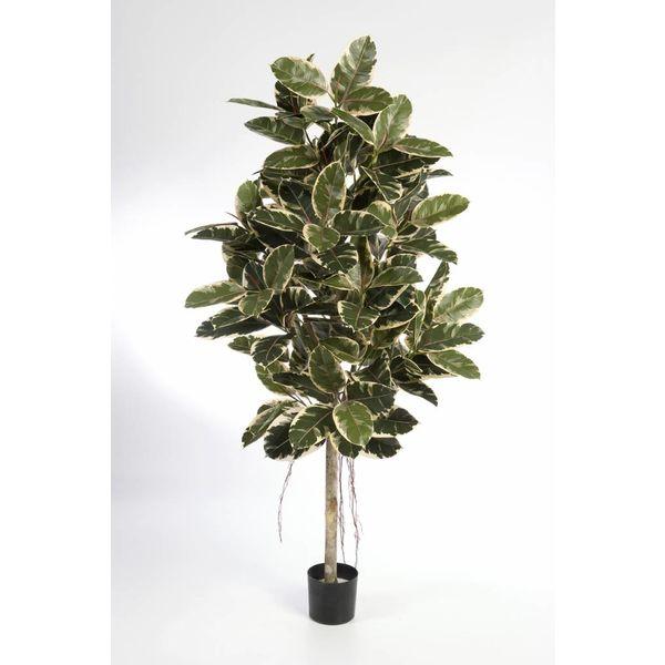 Ficus Elastica var. - kunstplant