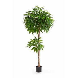 Fleur.nl - Pachira - kunstplant