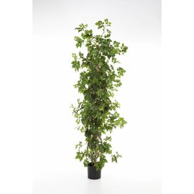 Fleur.nl - Cissus Plant - kunstplant