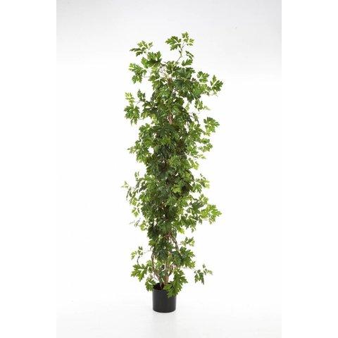 Cissus Plant - kunstplant