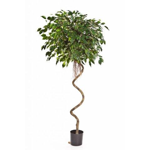 Ficus Exotica Spiral - kunstplant