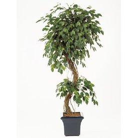 Fleur.nl - Ficus Corkscrew Exotica - kunstplant