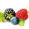 Fruit thee Bosvruchten