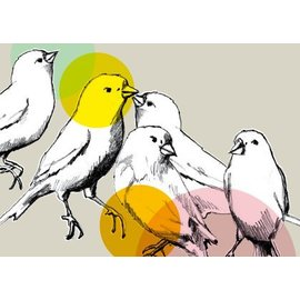 illi 5 Vögel
