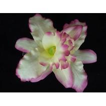Haarbloem Orchidee Geel/Roze