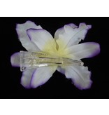 Haarbloem Orchidee