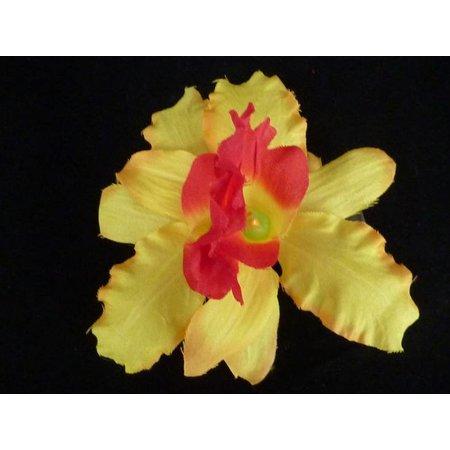Haarbloem Orchidee Geel