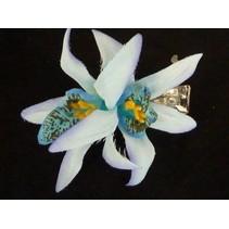 Hawii haarbloem Lichtblauw