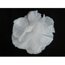 Hawaii bloem op kam Wit