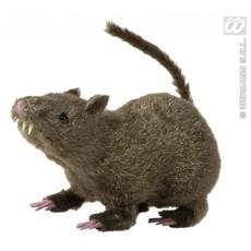 Harige rat 21cm