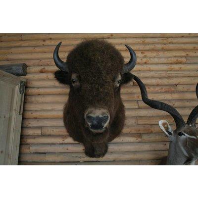 Bison (SB02)