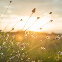 Welke soort natuurlijke zonnebrand is geschikt voor jouw huid?