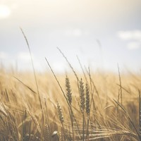 Welke natuurlijke zonbescherming moet je gebruiken?