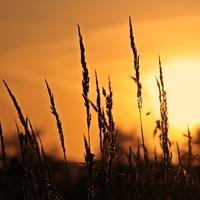Natuurlijke zonbescherming voor alle huidtypen