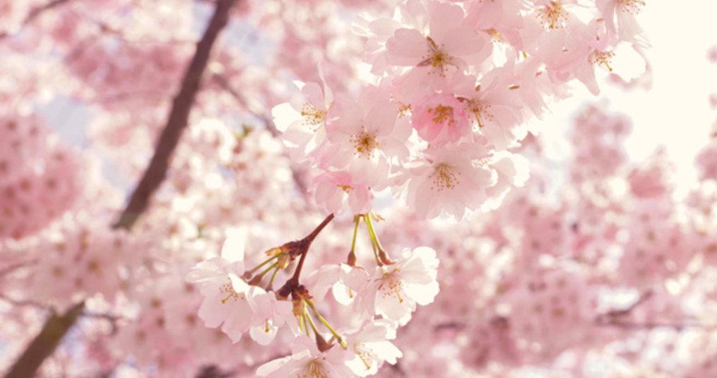 7 x leuke lente dekbedovertrekken
