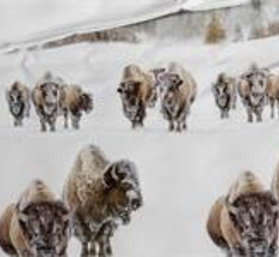 Katoen Flanellen Dekbedovertrek Obrien Buffalo