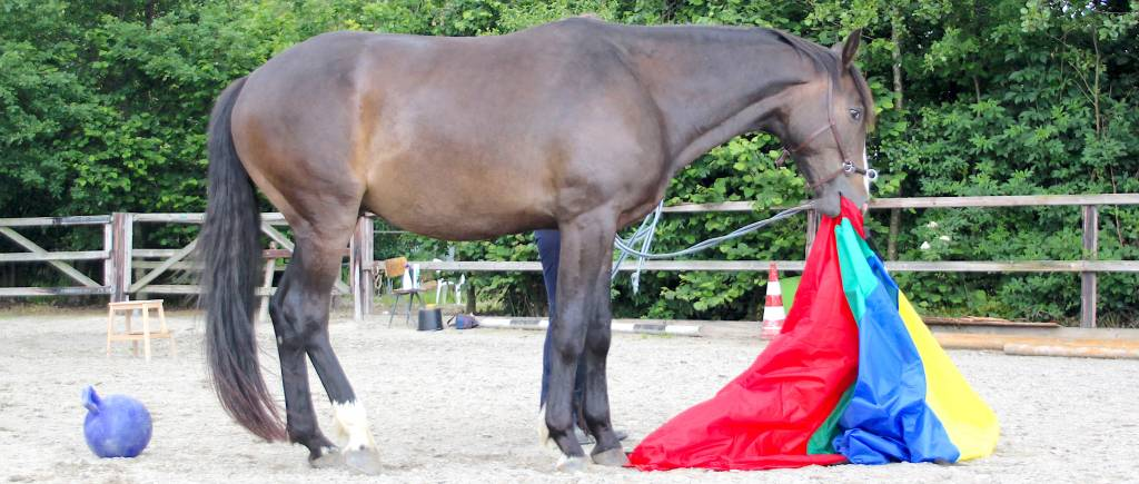 Groundwork & Lunging
