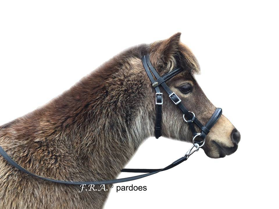 F.R.A. Side Pull Pardoes Pony