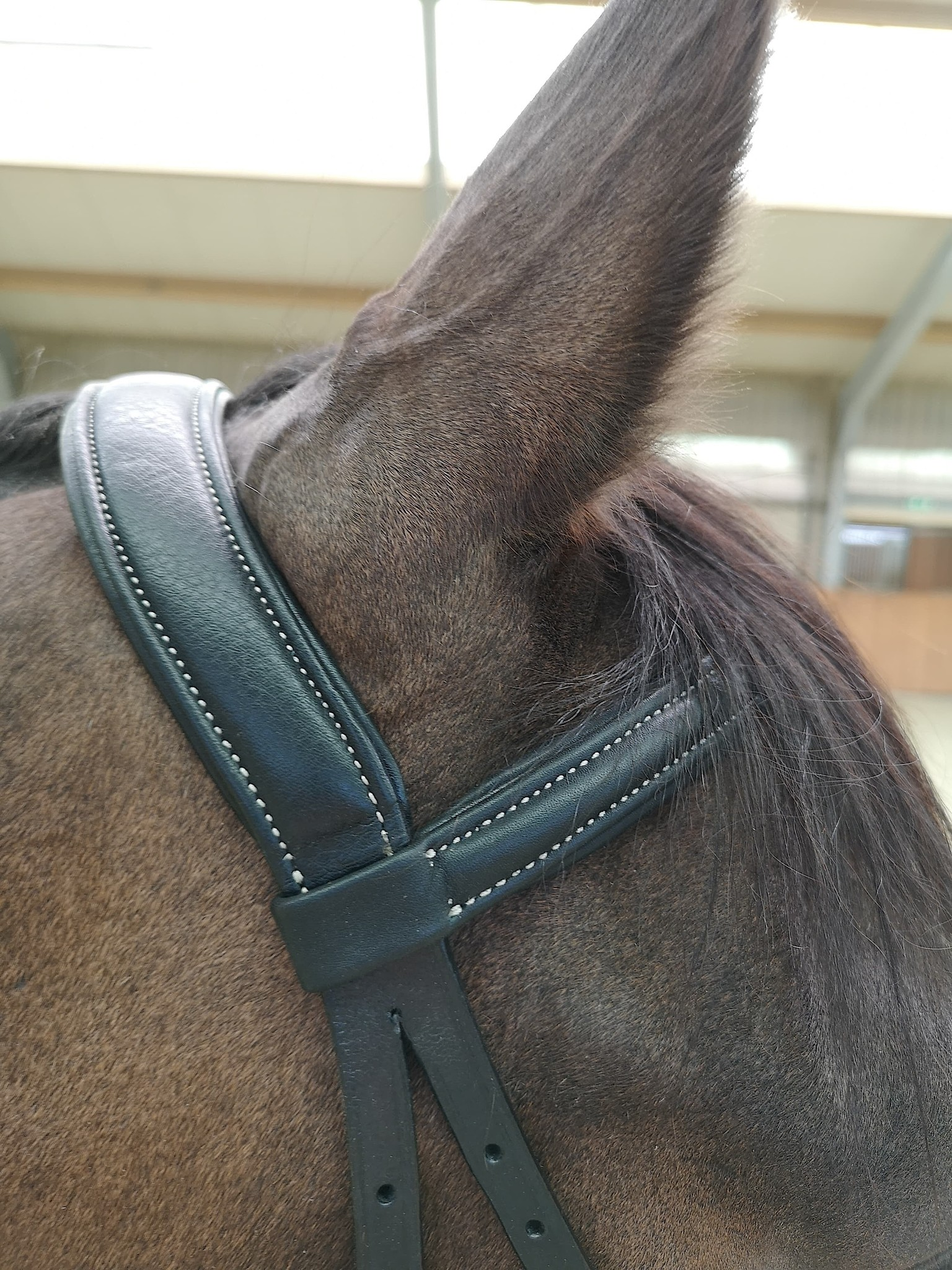 WH Scawbrig Supersoft Pony