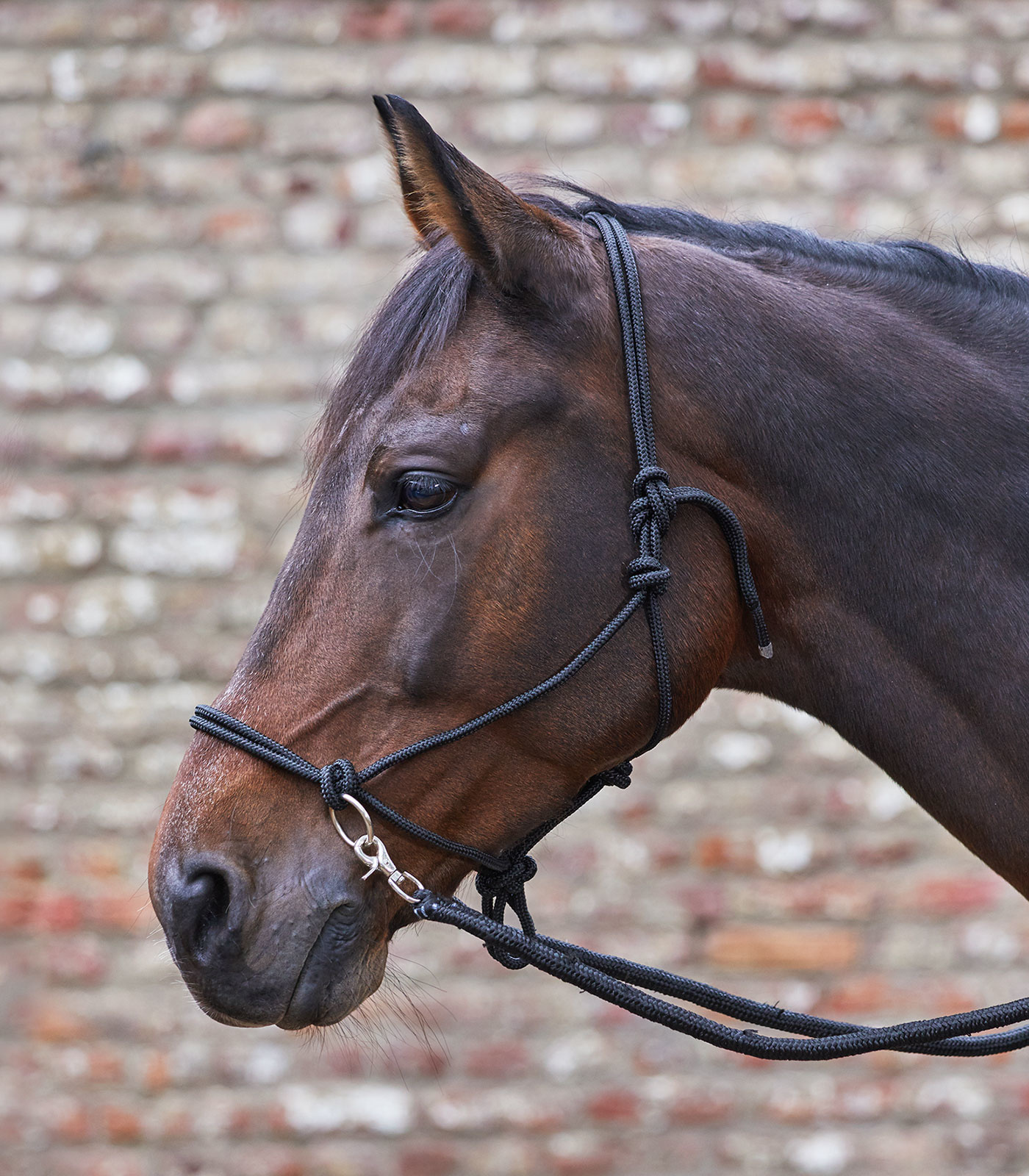 WH Pony Knotted Halter with reins
