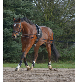 WH Lunging system  Pony