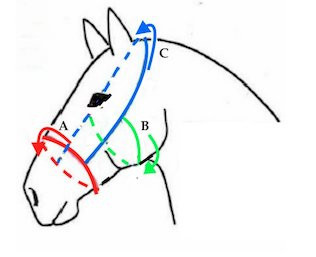 WH Kaptoom Anatomic  Pony