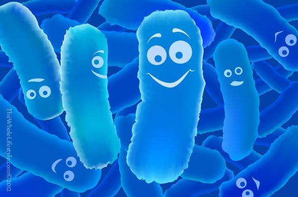Probiotica, onze darmen en onze huidflora