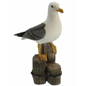 Typisch Hollands Seagull 50 cm with glass eyes