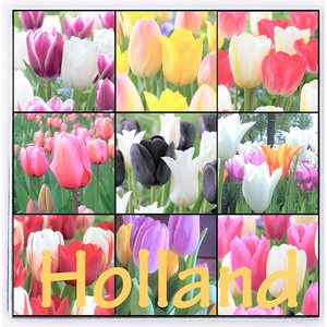 Typisch Hollands Holland napkins with Tulips - Assorted