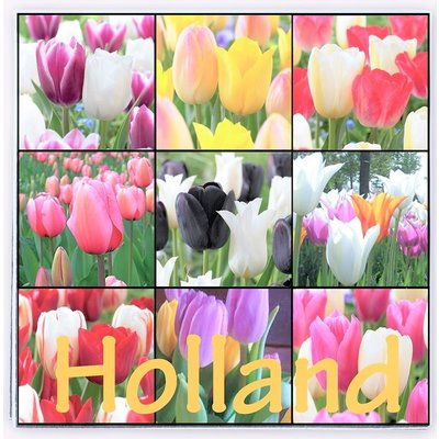 Typisch Hollands Holland servetten met  Tulpen - Assorti