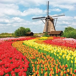 Typisch Hollands Holland napkins with Tulips & Windmill landscape
