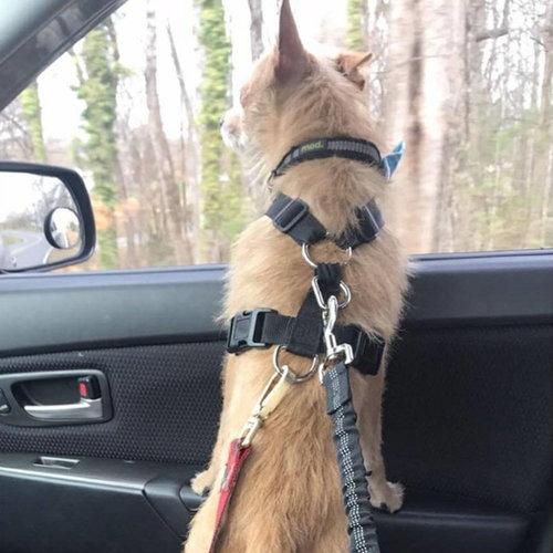 Security Leash Autogordel voor honden