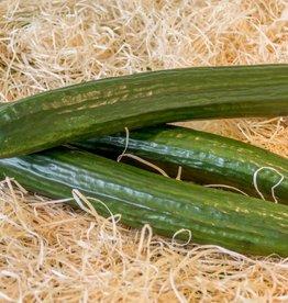 Cumcumber (per piece)
