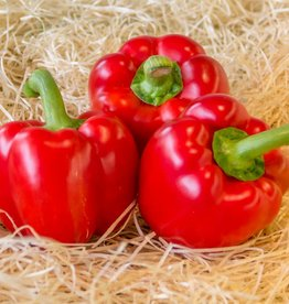 Paprika rood (per stuk)