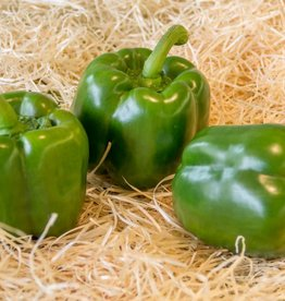 Paprika groen (per stuk)