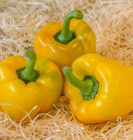 Paprika geel (per stuk)